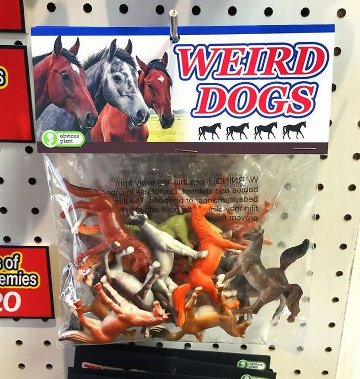 obvious plant weird dogs