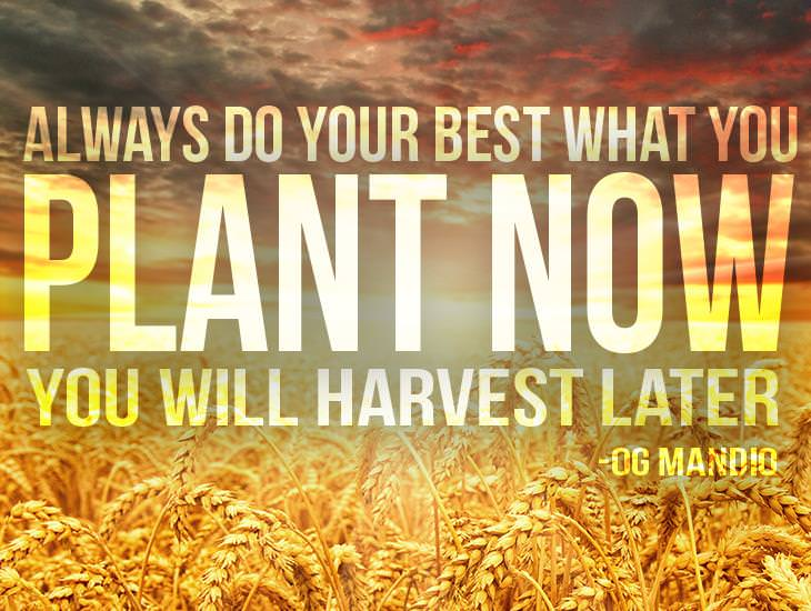 What You Plant Now, You Will Harvest Later