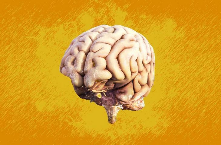 Golden milk: brain