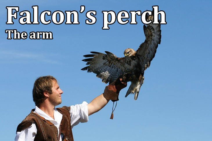 Kennings: falcon's perch
