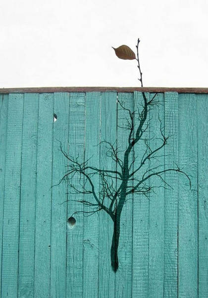Plants and Street Art: fence