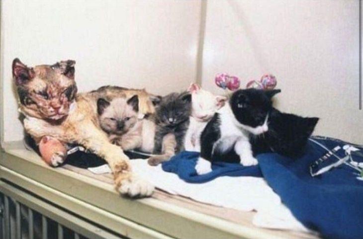 Heartwarming Cats: hero cat Scarlett fire