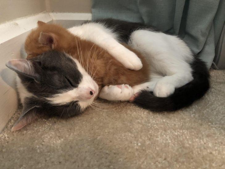 Heartwarming Cats: adoptive mother