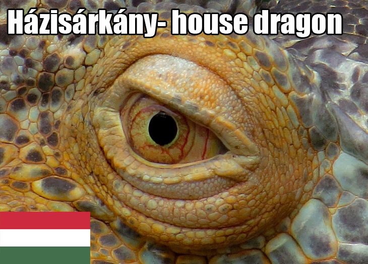 Terms of endearment: Hungarian dragon