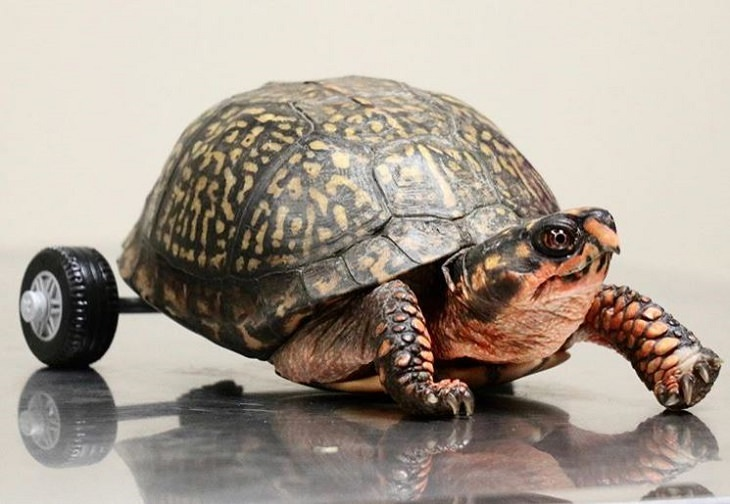 Faith in Humanity: legless turtle