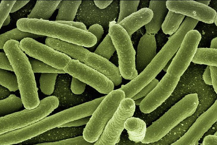 MCT: bacteria