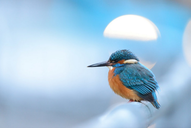 Bird photography winners: Common Kingfisher by Ben Andrew, Silver Award for best portrait