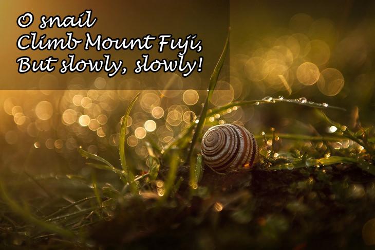 Haikus: snail