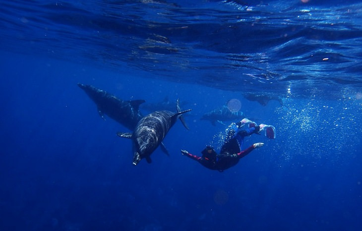Cousteau: dolphins