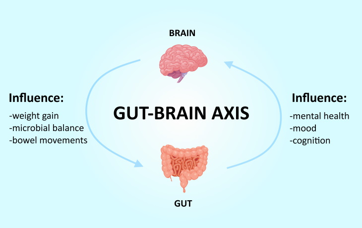 brain body connection  gut brain axis