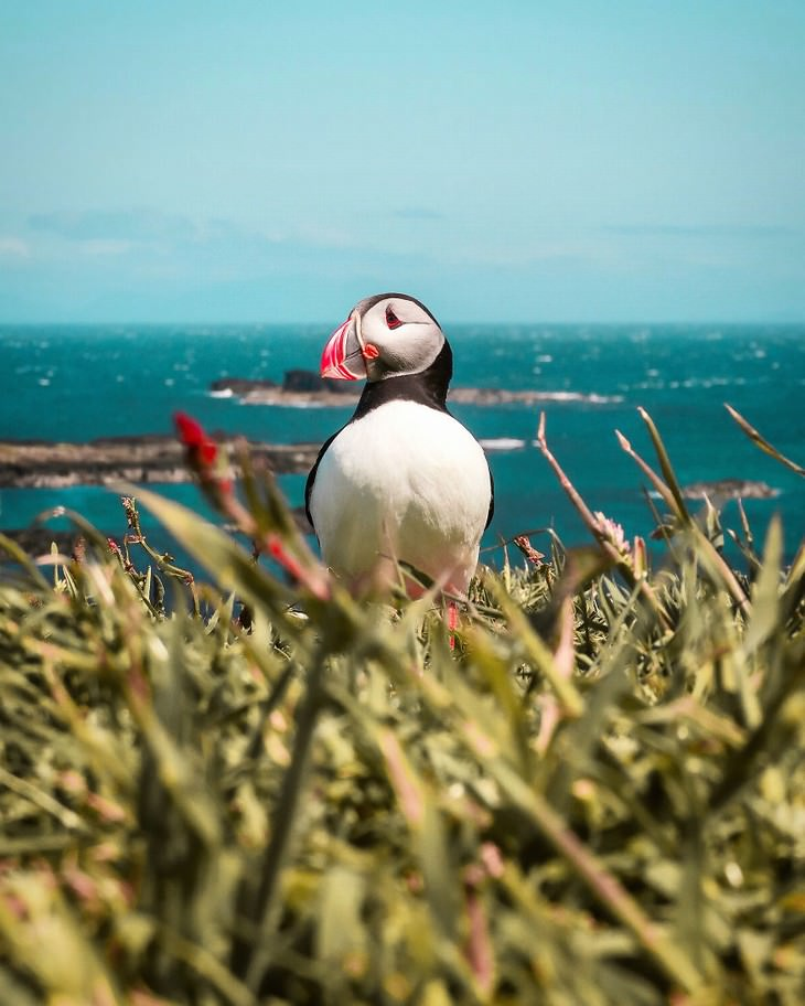 AGORA images nature photography competition entries 2019 Daniel Sampedro