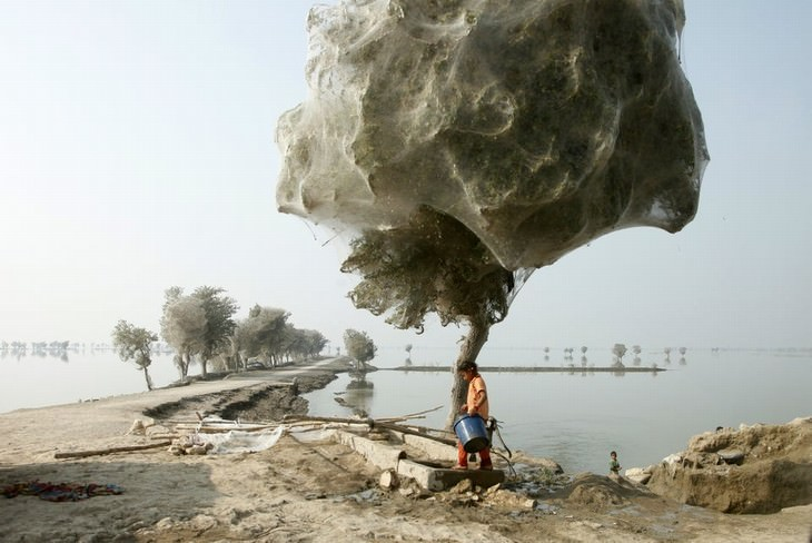 cool and weird nature photo collection spiderweb covered trees Pakistan