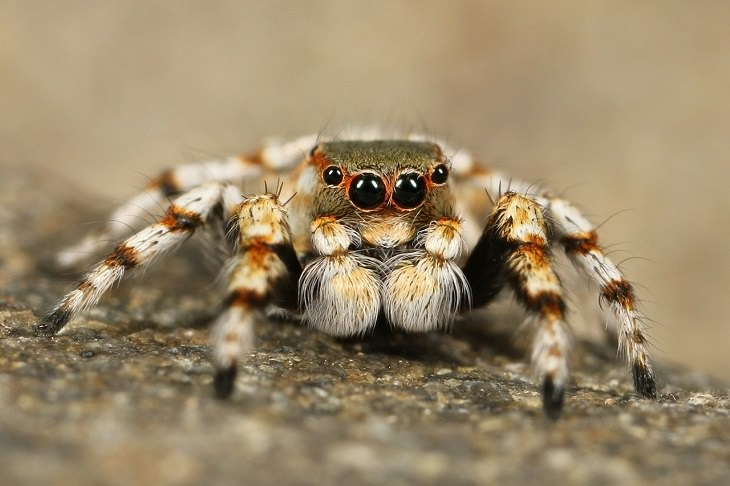 Spiders: arachnophobia