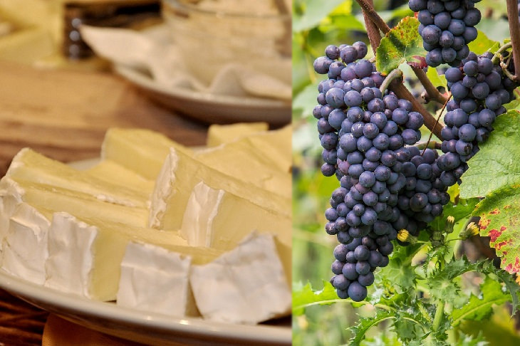 Cheese and wine pairings: brie and pinot noir