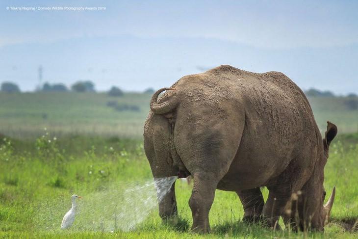 Comedy animals: rhino and bird