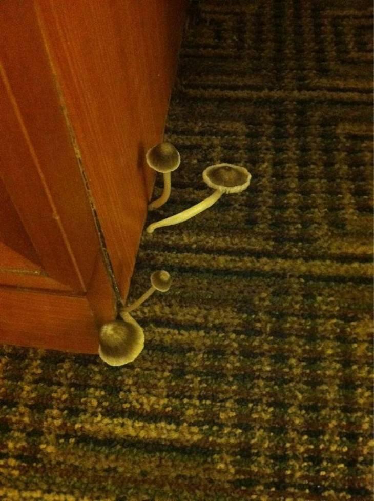 terrible hotel rooms mushrooms