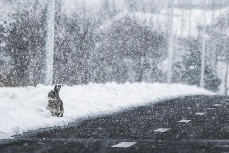 Iceland photography Signe Fotar Bunny