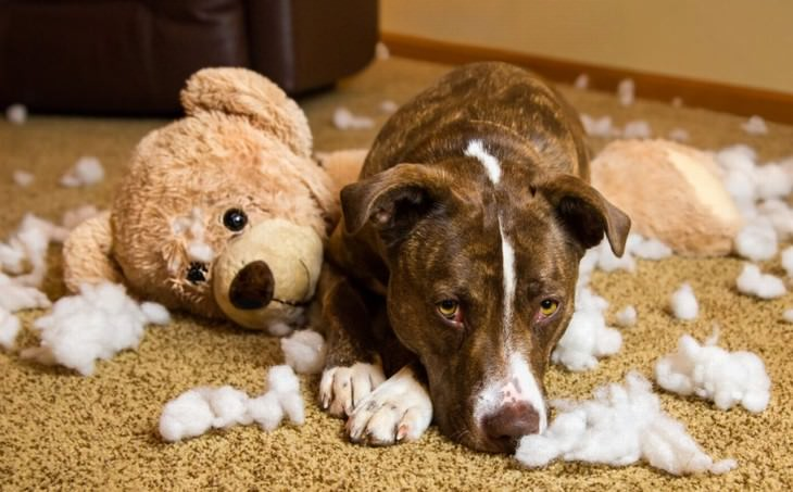 dealing with guilt dog ripped apart teddy bear guilty