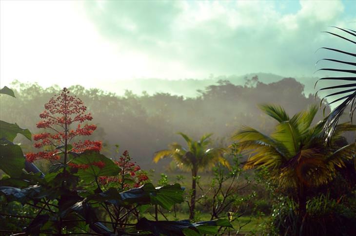 Guyana: plants exotic