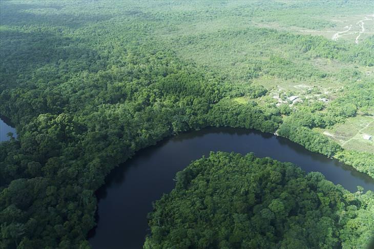 Guyana: rainforest