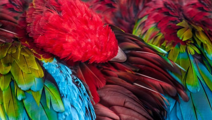 animal photos Goran Anastasovski parrot