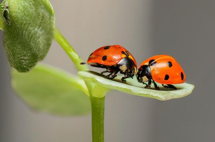 macro photos of nature ladybugs