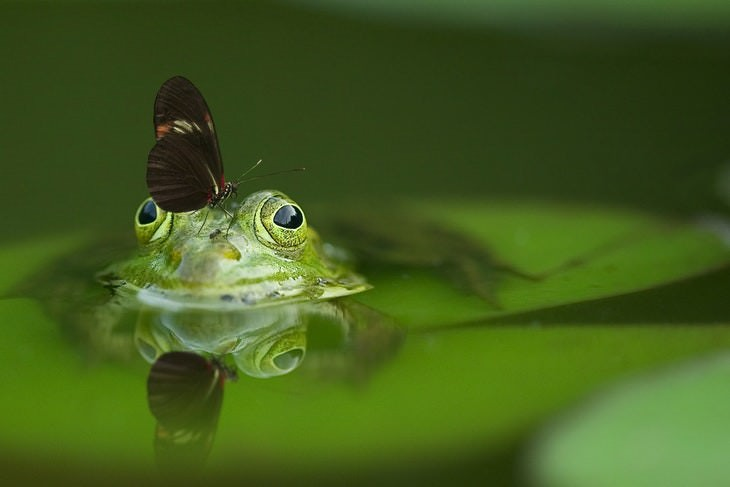 macro photos of nature frog and butterfly