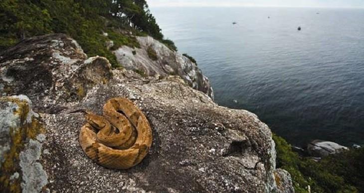 bandoned Islands and Their Histories Ilha daQueimada Grande, Brazil