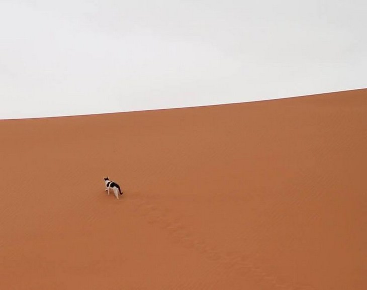 Spotted: Silly, Unique and Irresistibly Furry Cats Sahara desert
