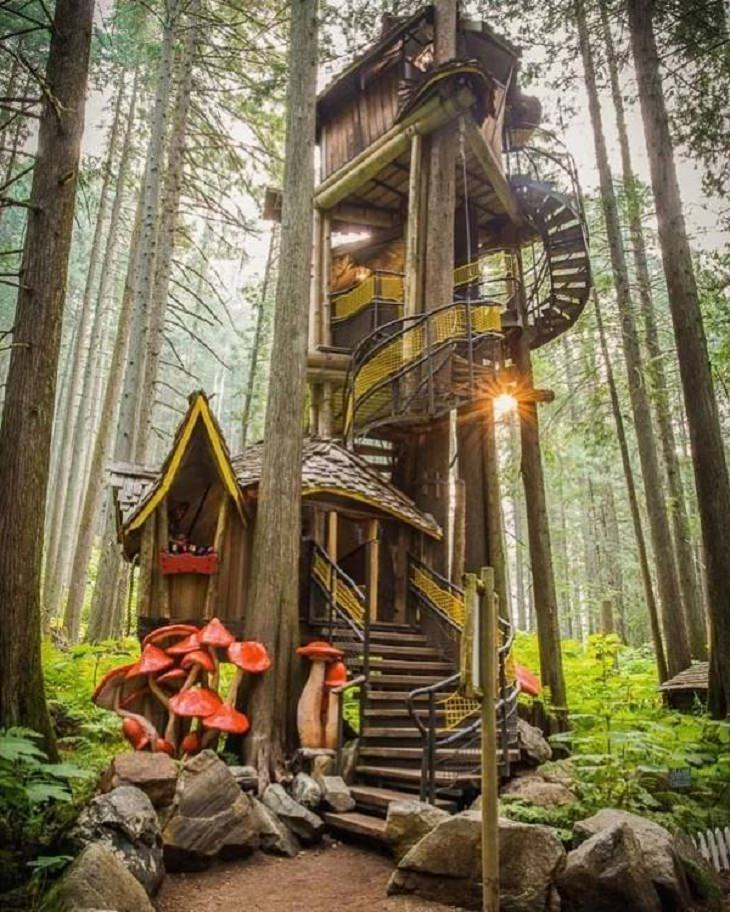 Tree Houses, stairs