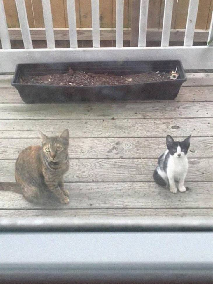 Spotted: Silly, Unique and Irresistibly Furry Cats polite