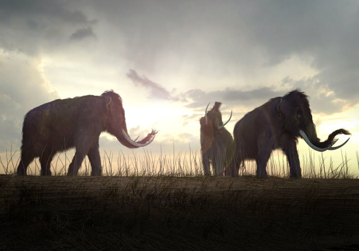 History Facts mammoths
