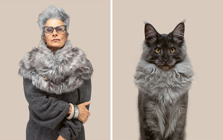 Gerrard Gethings cats and owners maine coon and woman Marielle And Jacques (Silver Maine Coon)