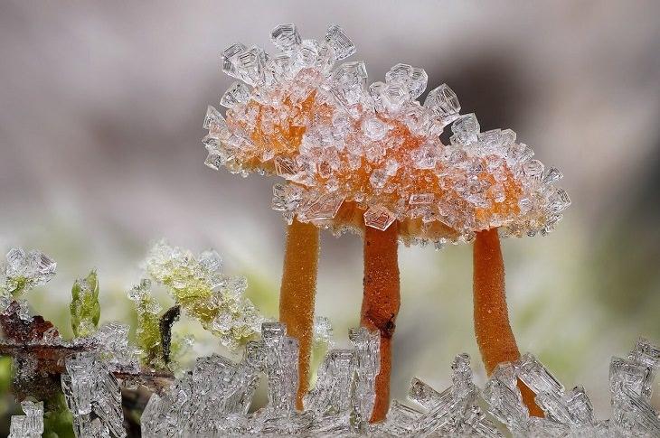 Close-Up Photographer, Plants & Fungi
