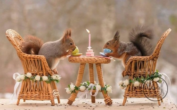 Adorable Photos of Squirrels Engage with Tiny Object by Geert Weggen, tea party