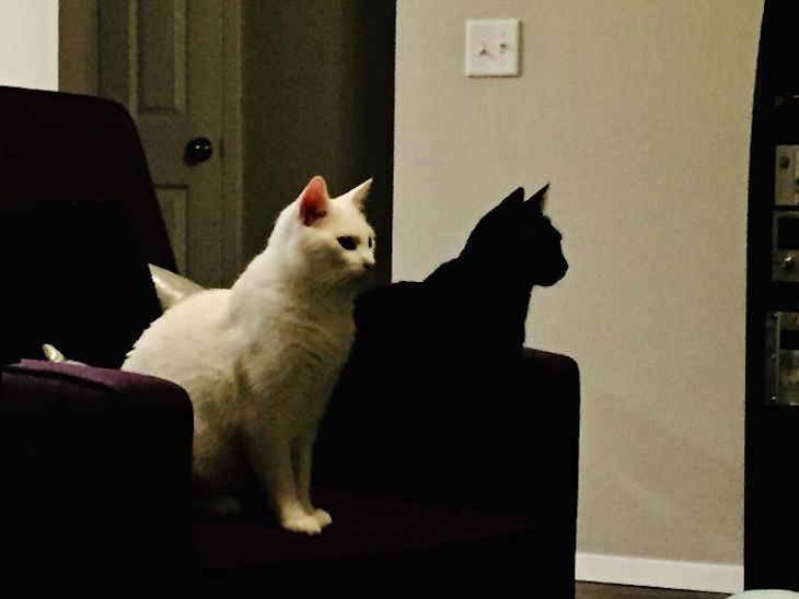 Accidental Optical Illusions, black and white cat