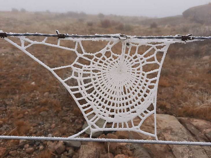Accidental Optical Illusions frozen spiderweb