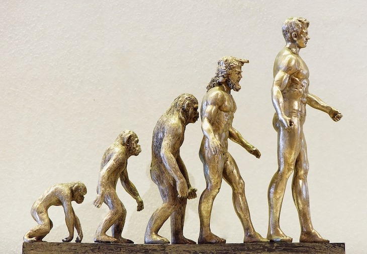 Study Finds Humans Are Evolving To Have 3 Arm Arteries evolution