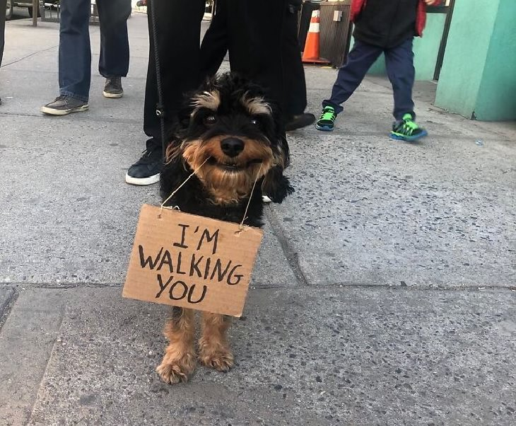 Funny messages written on signs held by small black and brown dog, Dog With Signs