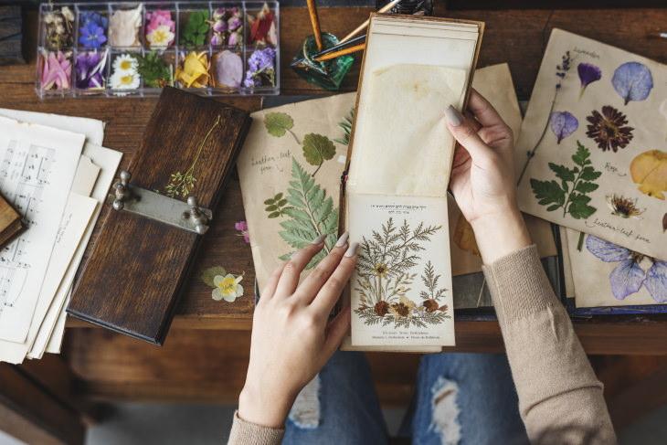 5 Ways to Preserve Flowers Pressed Flowers