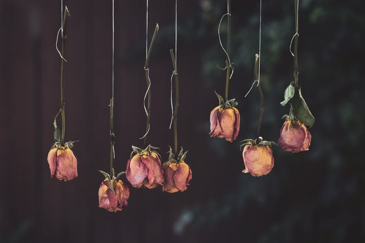 5 Ways to Preserve Flowers Hanging roses