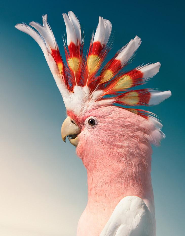 Bird Portraits by Tim Flach Cockatoo