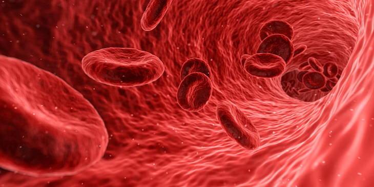 golden blood blood cells in the blood vessel