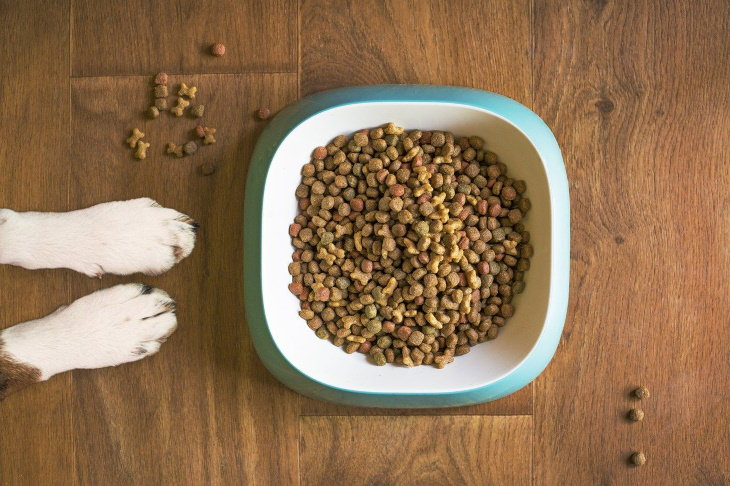 6 Things That Attract Rodents to Your Home dog food
