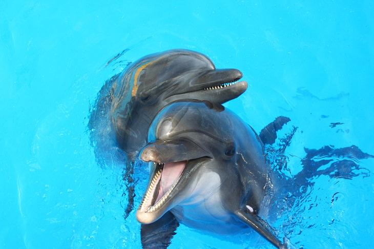Adorable Sea Animals, Dolphins
