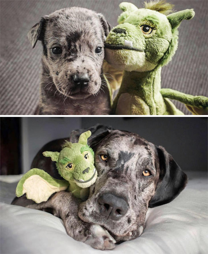 Heart Melting Photos of Pets & Their Favorite Toys, puppy vs full grown dog