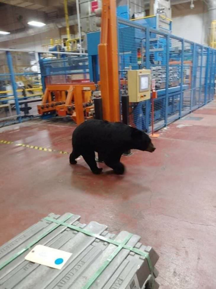 20 Heart Stopping Safety Fails, bear