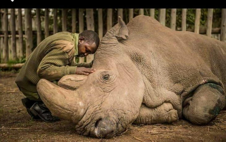 Poignant Photos Saying farewell to an entirespecies:this is a photo of thevery last male Northern White Rhino (2018)