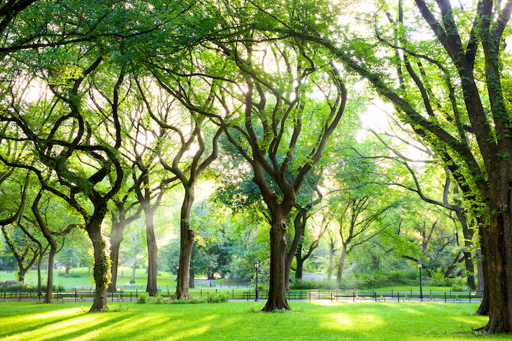 The Fascinating Origins of 20 Popular Last Names, trees