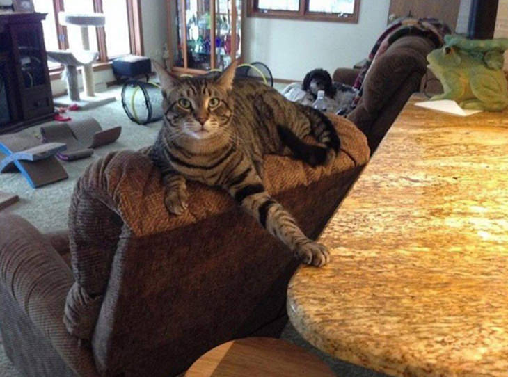 15 Times Cats Were Being Hilariously Mean, touching the counter